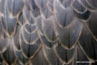 falcons_38