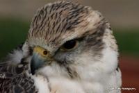 falcons_7