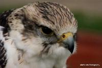 falcons_8