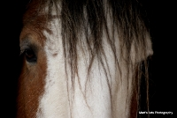 horses_13