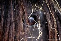 horses_14