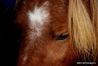 horses_16