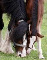horses_17