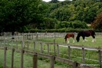 horses_18