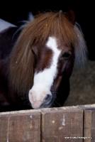 horses_20