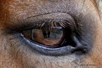 horses_21