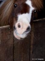 Horses,Ponies etc