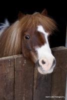 horses_23