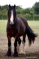 horses_24