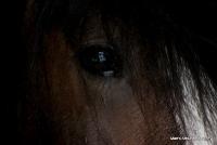 horses_25