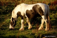horses_26