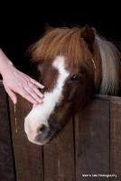 horses_6