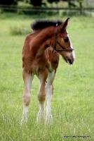 horses_7