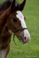 horses_9