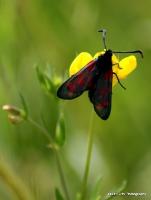 moths_10