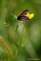 moths_11