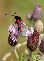 moths_13