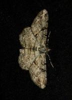 moths_1