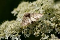 moths_2