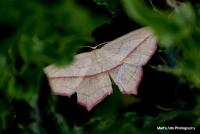 moths_3