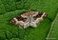 moths_4