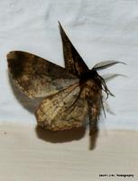 moths_5