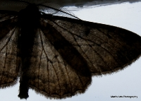moths_6