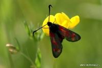 moths_9