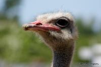 emu_3