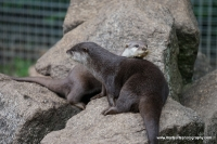 Otters_19