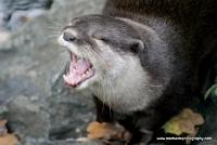 Otters_1