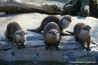 Otters_25