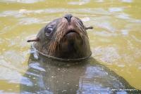 Patagonian Sealions & Fur Seals.
