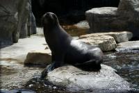 Seals_1