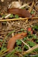 slugs_17