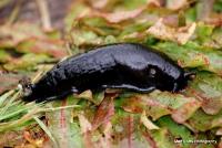 slugs_4