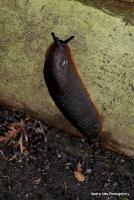 slugs_5