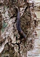 slugs_6