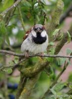 sparrow_7