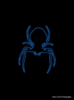 spiders_10