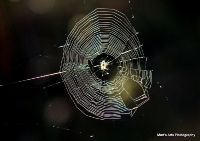 spiders_11