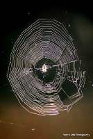 spiders_12