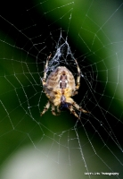 spiders_14
