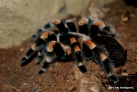 spiders_18