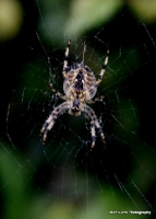 spiders_1