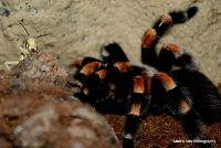spiders_22