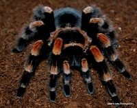 spiders_24