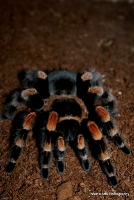 spiders_25