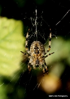 spiders_3