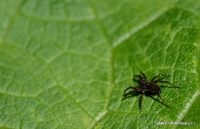 spiders_5